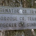 The junction with the Senator Creek Trail marks the beginning of a steep climb up and over to Grouse Creek further west.- Decker Creek to Grouse Creek Loop