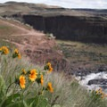 Wildflowers.- Palouse Falls State Park