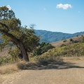 The Hanging Tree, the seventh stop along the self-guided historic tour. - Almaden Quicksilver County Park Historic Trail