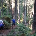 Walking through the forest along the North Ridge Trail.- Marys Peak via North Ridge Trail