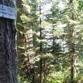 At this junction, head up to the edge of the trees for a walk to the summit of Marys Peak.- Marys Peak via North Ridge Trail