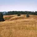 In autumn, the meadows near the summit are golden brown.- Marys Peak via North Ridge Trail