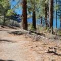 The Secret Cove Trail.- Secret Cove + Chimney Beach Loop