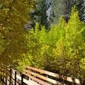 Bridge over Big Pine Creek North Fork.- First Falls Day Hike