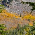 Aspens in the fall.- Tamarack Peak Loop
