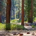 Relax under the pines at Zephyr Cove Park.- Zephyr Cove Park
