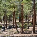 Hiking trails lead through the pines at Zephyr Cove Park.- Zephyr Cove Park