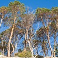 Trees line the high bluffs of Cutts Island.- Cutts Island Sea Kayaking