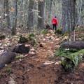 Riverwalk Trail.- Trout Lake Creek Campground
