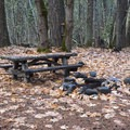 Picnic table and barbecue ring at Trout Lake Creek Campground.- Trout Lake Creek Campground