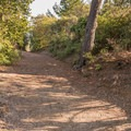 Trail access from Summit Road.- Knibbs Knob