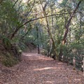 Trailhead from Uvas Canyon County Park Campground.- Knibbs Knob