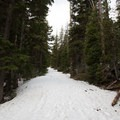 The trail is wide enough to be traveled by skiers and snowmobiles.- Flag Point Fire Lookout