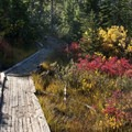 The shrubs take on some beautiful color in September.- Imogene Lake + Divide