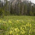 Beautiful flower meadows early in the hike.- Stanley Lake Creek to Hansen Lakes