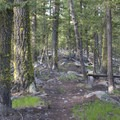 The trail has sections of ridge-top riding.- Redfish Lake Loop, Grand Mogul Trail to Bench Lakes