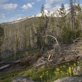 The trail opens into a few meadows near the junction with Bull Moose Creek.- Redfish Lake Loop, Grand Mogul Trail to Bench Lakes
