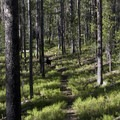 The trail is not frequently used, and thus it is narrow and faded in places.- Huckleberry Creek