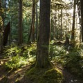 Old-growth temperate forest along the Sol Duc River.- Sol Duc River Salmon Cascades