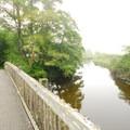 Footbridge over Ozette River.- Ozette Triangle Loop Trail