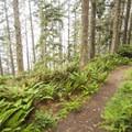 Cape Alava Trail.- Ozette Triangle Loop Trail