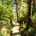 Boardwalk along the Sand Point Trail.- Ozette Triangle Loop Trail