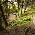 Shi Shi Beach Trail makes a steep descent down to the beach.- Shi Shi Beach Hike