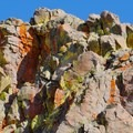 Unidentified lichen (help us identify it by providing feedback).- Red Lake Peak Loop