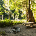 Typical campsite at Klahowya Campground.- Klahowya Campground