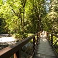 Barnes Creek footbridge en route to Marymere Falls.- Marymere Falls Hike