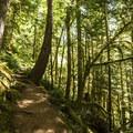 Mount Storm King Trail.- Mount Storm King Trail