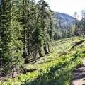 The trail drops from the ridgeline and curves around into Sugar Bowl Ski Resort.- Mount Judah Loop