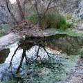 Pools of water near the falls.- Darwin Falls