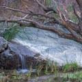 A small waterfall along the trail.- Darwin Falls