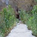A concrete path over pools of water near Darwin Falls.- Darwin Falls
