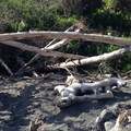 Some driftwood shelters can also be found along the beach.- La Push, Third Beach