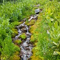 A spring cascades down mossy banks.- North Fork of the Big Wood - Amber Lakes