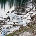 Hundreds of dead tree trunks ripped out by winter avalances accumulate in the middle Amber Lake.- North Fork of the Big Wood - Amber Lakes