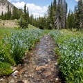 The outlet stream from the highest lakes meanders through a large patch of Idaho bluebells.- North Fork of the Big Wood - Amber Lakes