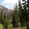There are a handful of flat grass and tree covered meadows on the way to the high country.- Broad Canyon: Betty, Goat + Baptie Lakes and the Surprise Valley Divide