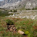 Wildflowers and soaring granite walls.- Broad Canyon: Betty, Goat + Baptie Lakes and the Surprise Valley Divide