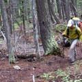 A hiker enjoys the quiet and solitude of a dense Douglas fir forest.- Fall Creek Canyon Hike