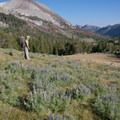 The transition out of a sagebrush landscape happens at about 9,400 feet.- Fall Creek - Left Fork Canyon