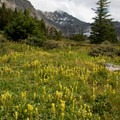 Alpine flowers decorate the upper 2 miles of alpine meadows. Here a patch of slender paintbrush (Castilleja gracillima) is abundant.- Fall Creek - Surprise Valley, Broad Canyon Divide