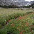 Beautiful alpine meadows stretch for miles.- Fall Creek - Surprise Valley, Broad Canyon Divide
