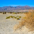 Expansive views at Mesquite Flat Sand Dunes, Death Valley National Park.- Mesquite Flat Sand Dunes