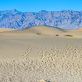 Paths from a few intreped visitors extend into the dunes at Mesquite Flat Sand Dunes, Death Valley National Park.- Mesquite Flat Sand Dunes