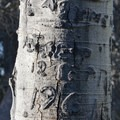 A 1961 engraving in an aspen along the trail.- Marshall Lake