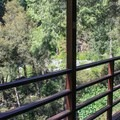 Rooms overlook the North Fork of the Yuba River.- Herrington's Sierra Pines Resort