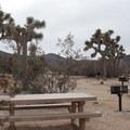 Typical sites at Ryan Campground, Joshua Tree National Park.- Ryan Campground